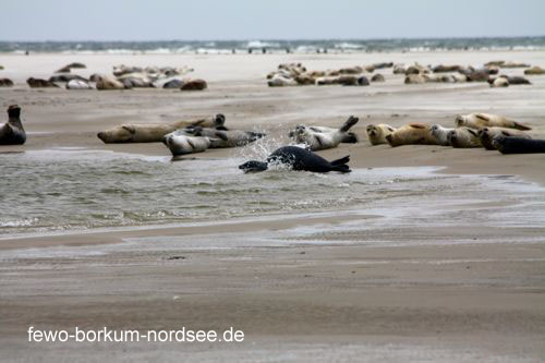 nordsee impressionen ferienwohnung mare aureum borkum nordsee. Black Bedroom Furniture Sets. Home Design Ideas